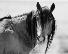 Original fine art photograhy titled Wild Stallion Portrait by Jon Paul