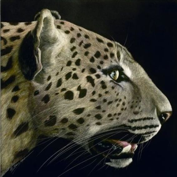 Sally Maxwell - Profile of a Leopard