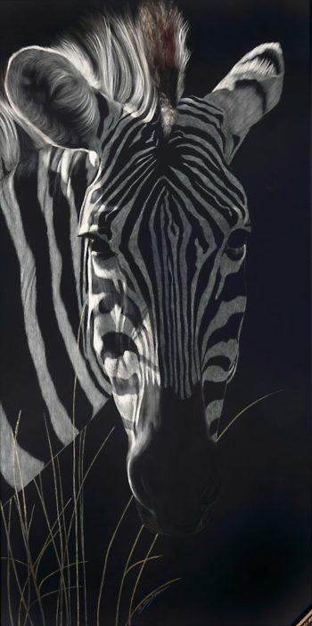 Zebra In The Long Grass
